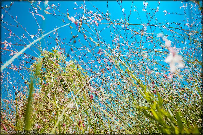 Одно фото / Израиль, Зима ушла - весна не пришла