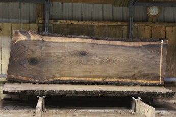 "616 Walnut - 8 10/4 x 43"" x 33"" Wide x  10'  Long"