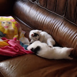 katten - 2010-07-11%2B12-11-46%2B-%2BDSCF1375.JPG