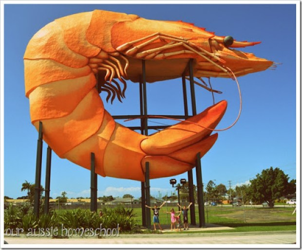 The Big Prawn near Ballina, NSW. | Our Aussie Homeschool