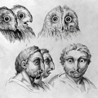 17th Century Sketches Comparing Human And Animal Faces