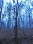 Sieht man den Waldschratt?