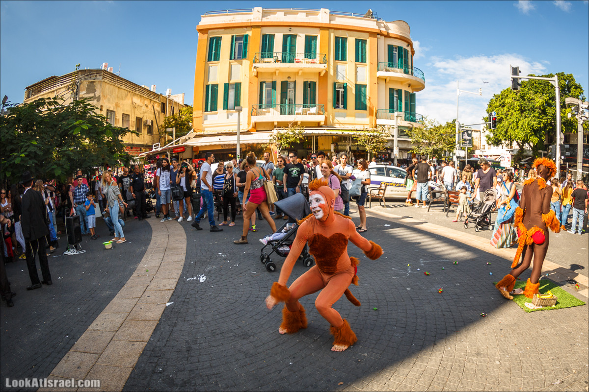 Тель Авивские веселые обезьяны | LookAtIsrael.com - Фото путешествия по Израилю