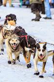 Iditarod2015_0162.JPG