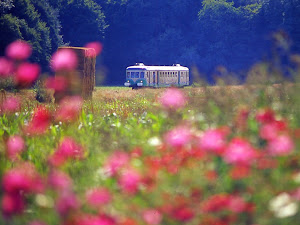 train-touristique-de-la-vallee-du-loir©CDT41-dsourice