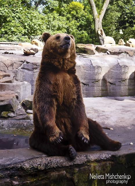 Bears Kaliningrad Zoo, Kaliningrad Zoo