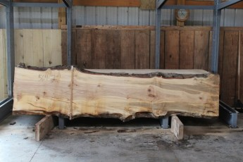 "564  Hard Maple Curly Burly -2 10/4 x  33"" x  22"" Wide x  11'  Long"