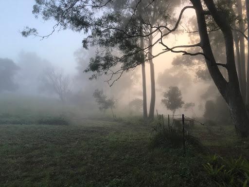 20180415-fog3-2018-04-15-07-07.jpg