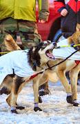 Iditarod2015_0372.JPG