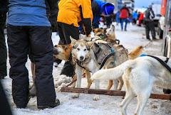 Iditarod2015_0020.JPG