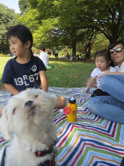 Snaggletooth dog photobomb in Yoyogi Park, Tokyo