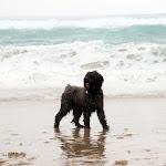 2Boris on the Beach April 2014.jpg