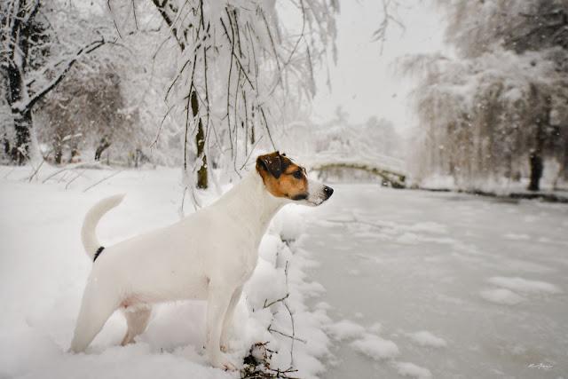 Могут ли собаки заболеть гриппом