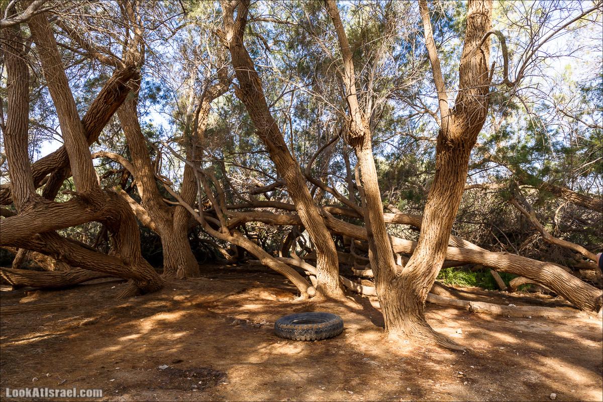 Пасхальная прогулка по пустыне | LookAtIsrael.com - Фото путешествия по Израилю