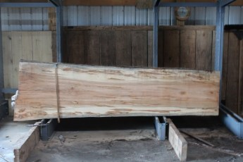 "567  Maple Ambrosia -4 10/4x 35"" x 28"" Wide x  10'  Long"