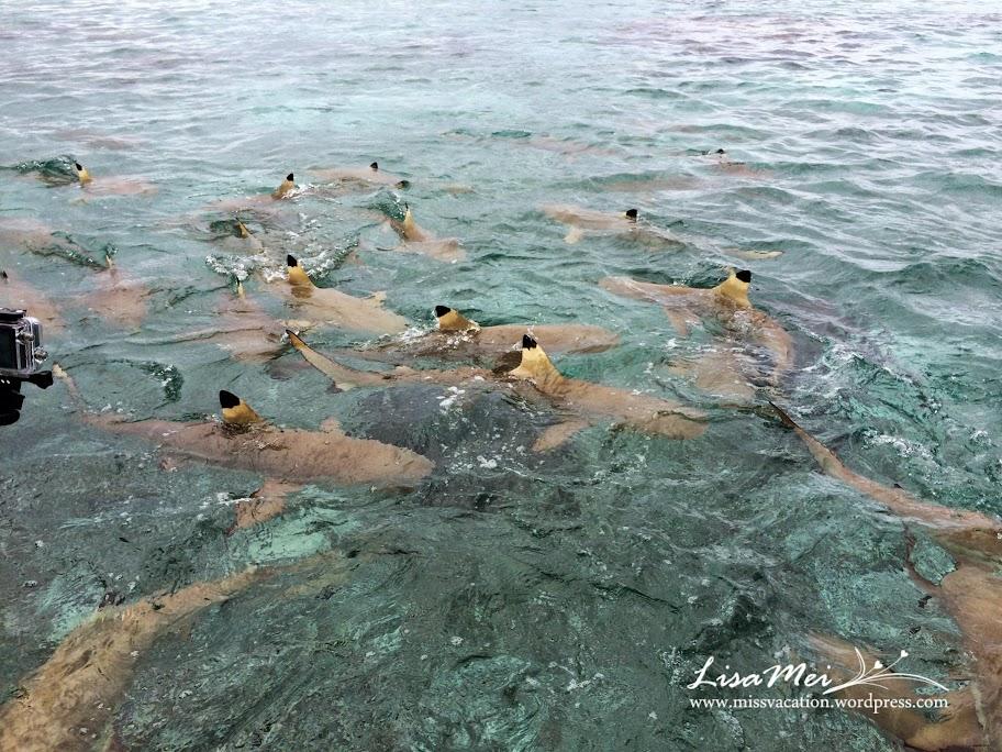 Bora Bora: Swimming With Sharks! (3/6)