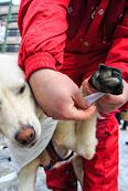 Iditarod2015_0118.JPG