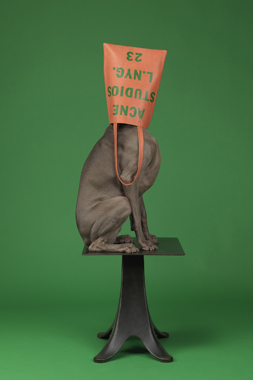 *Hat Dogs:美國攝影師William Wegman展現拿手獵狗展秀拍攝絕活! 5