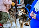 Iditarod2015_0031.JPG