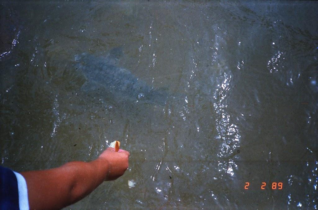 0600Feeding the Fish in Darwin Harbour