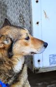Iditarod2015_0029.JPG