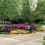 images-Seed and Sod-trees_b12.jpg