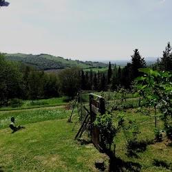 garden7.jpg