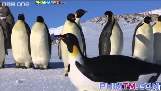 Xem Phim Cuộc Sống Chim Cánh Cụt Bắc Cực - Penguins: Spy In The Huddle - phimtm.com - Ảnh 1