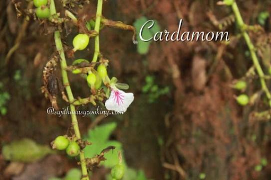 Cardamom 3