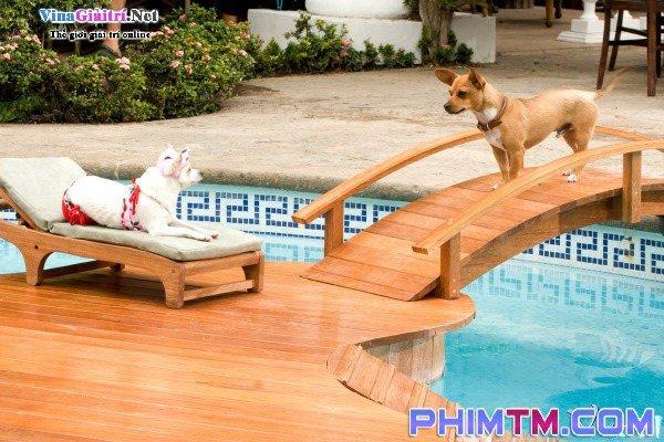 Xem Phim Những Chú Chó Chihuahua Ở Đồi Beverly - Beverly Hills Chihuahua - phimtm.com - Ảnh 1