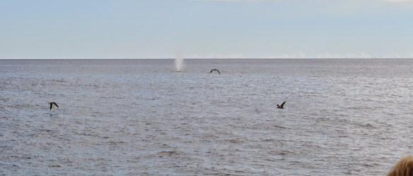 waterspuit walvis!