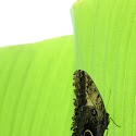 Black on green_John Macadam.jpg
