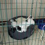 katten - 2010-07-03%2B15-55-48%2B-%2BDSCF1336.JPG