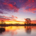 Advanced 2nd - Bushy Park Sunrise_Martin Patten.jpg