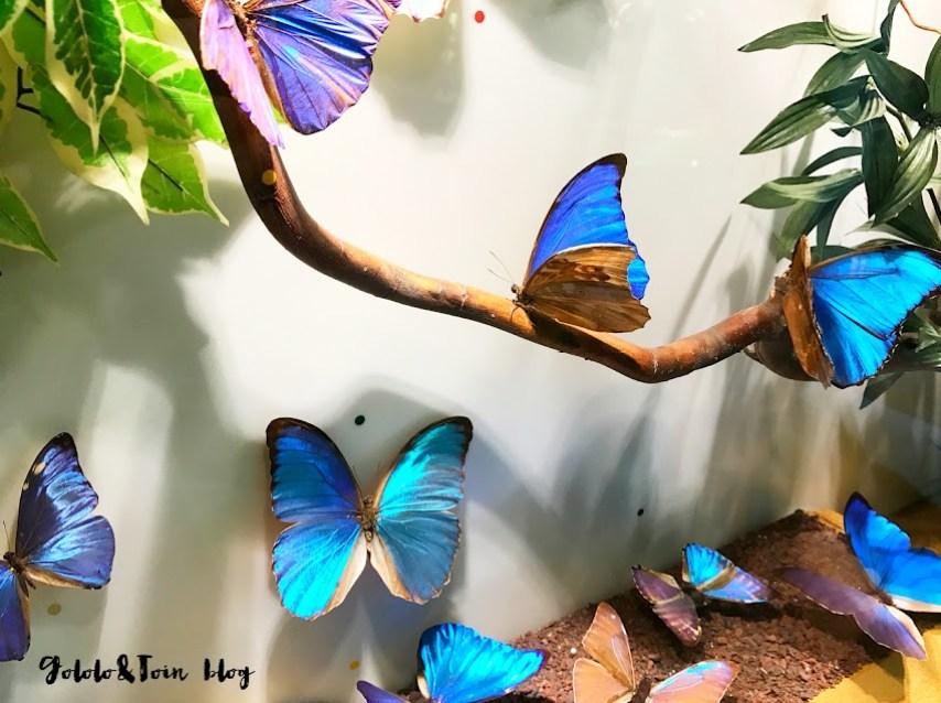 insectpark-san-lorenzo-el-escorial-centro-naturaleza-mariposas-colores