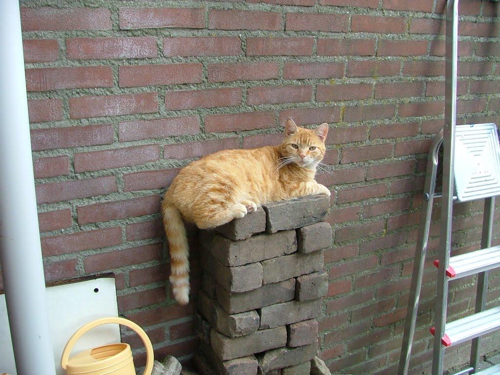 katten - DSCF2667.JPG
