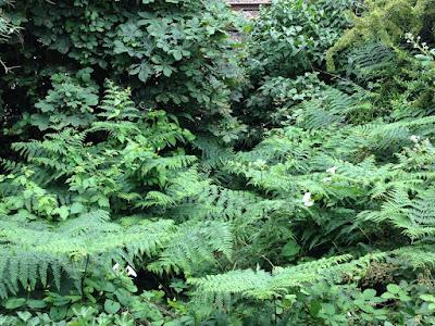 20120718_Rain_Green