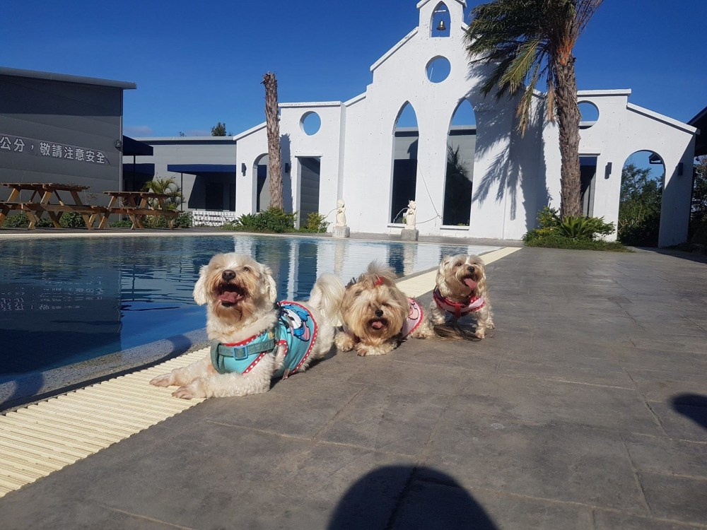 寵愛月台庭園泳池寵物民宿