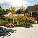 images-Seed and Sod-trees_b7.jpg