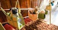 Передержка собак на время отпуска