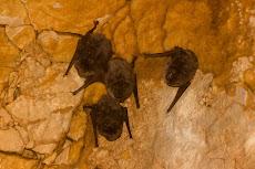 ...and a few bats.