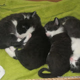 katten - 2011-03-18%2B10-49-25%2B-%2BIMG_0319.JPG