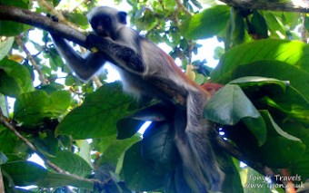 Baby monkey in Jozani