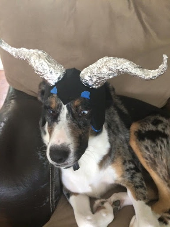 Dog Maleficent Costume DIY Using foil to make the shape of the horns Domesticability.com