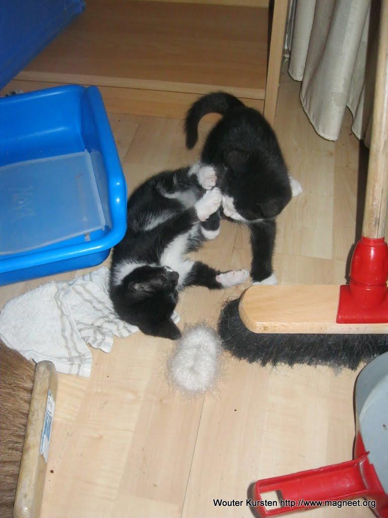 katten - 2011-04-15%2B19-07-12%2B-%2BIMG_0402.JPG