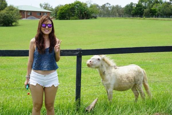 Australia Pony