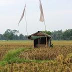 0416_Indonesien_Limberg.JPG