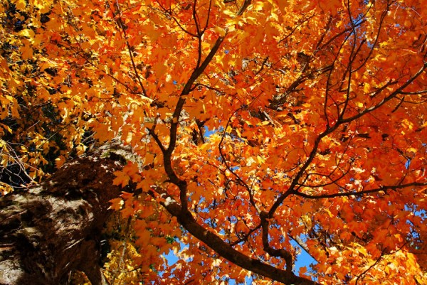 This Week in the Digital Photography School Forums   Oct 50 - Nov 5