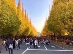 こんな「神宮外苑のいちょう並木」でした。【昼編】