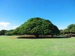 ミチヨ、ハワイへ行く⑥〜まったりオアフ島観光